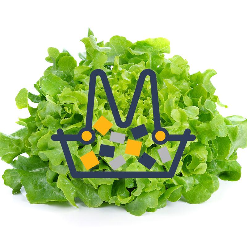 demo_starter_lettuce1.jpg